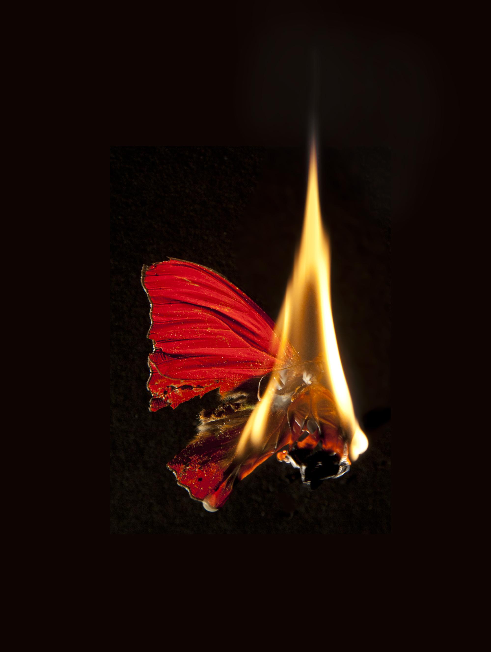 картинки мотылек летит на огонь и вода августе- сентябре дешевые